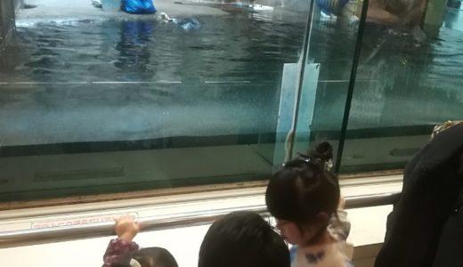 須磨海浜水族園に行ってきました。