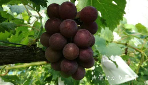 現在のブドウの様子&商品案内発送しました。