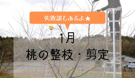 【白桃】1月桃の剪定が始まりました。(失敗談有り)