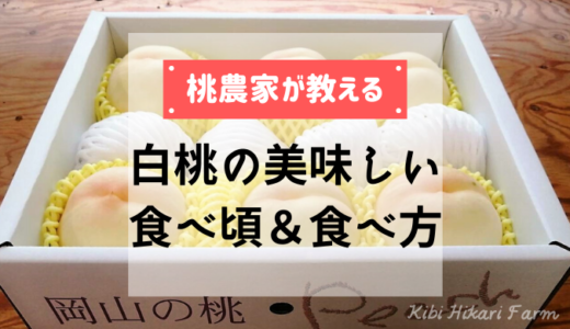 必読!白桃の美味しい食べ頃&食べ方【岡山の桃農家プレゼンツ】