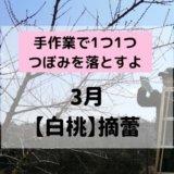 桃の摘蕾 吉備ひかり農園