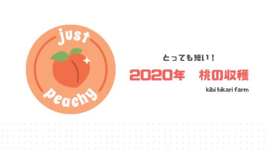 桃の収穫が終了しました。~短い収穫期間の様子【2020年】~