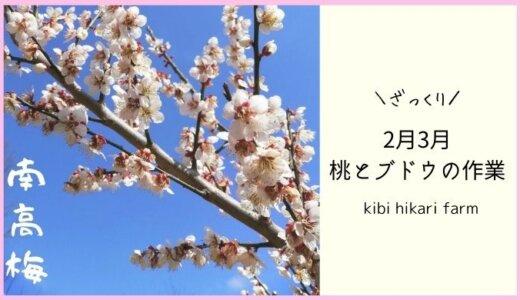 2月3月桃とブドウの剪定から摘蕾まで