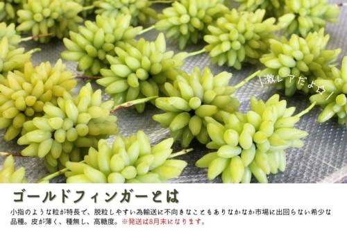 岡山県産 ゴールドフィンガー ヤフーショッピング