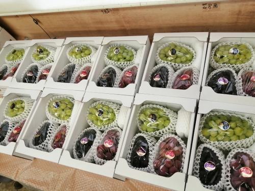 3色ブドウ ブドウの詰め合わせ クイーンニーナ シャインマスカット オーロラブラック
